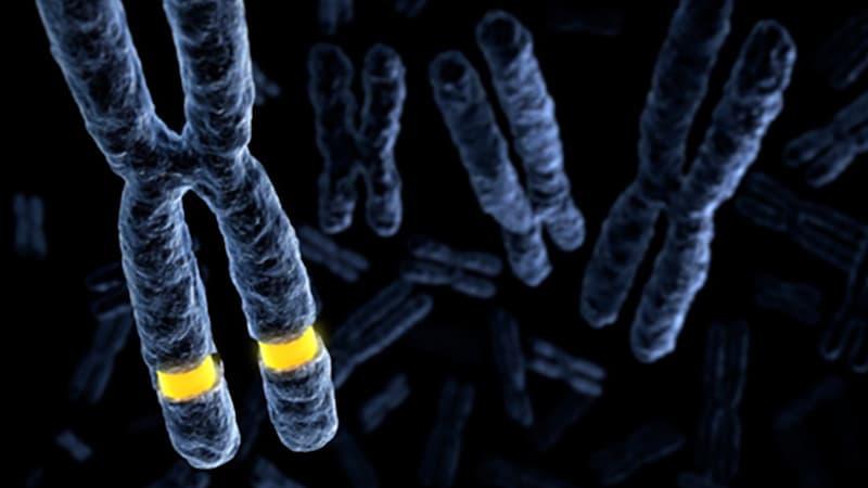 Fragilis X-kromoszóma