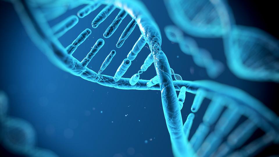 Spermium DNS