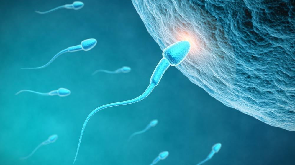 pmn elasztáz spermium