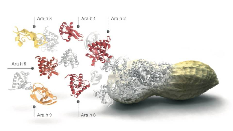 Molekuláris allergológia